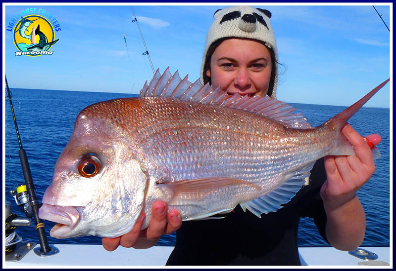 Reef fishing with Lighthouse Charters Narooma